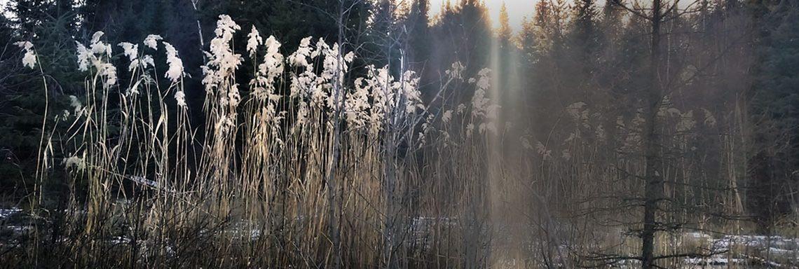 wildood morning - pond with sunlight beam- dawn kotzer photos