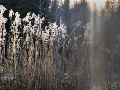 wildood morning - pond with sunlight beam- dawn kotzer photos