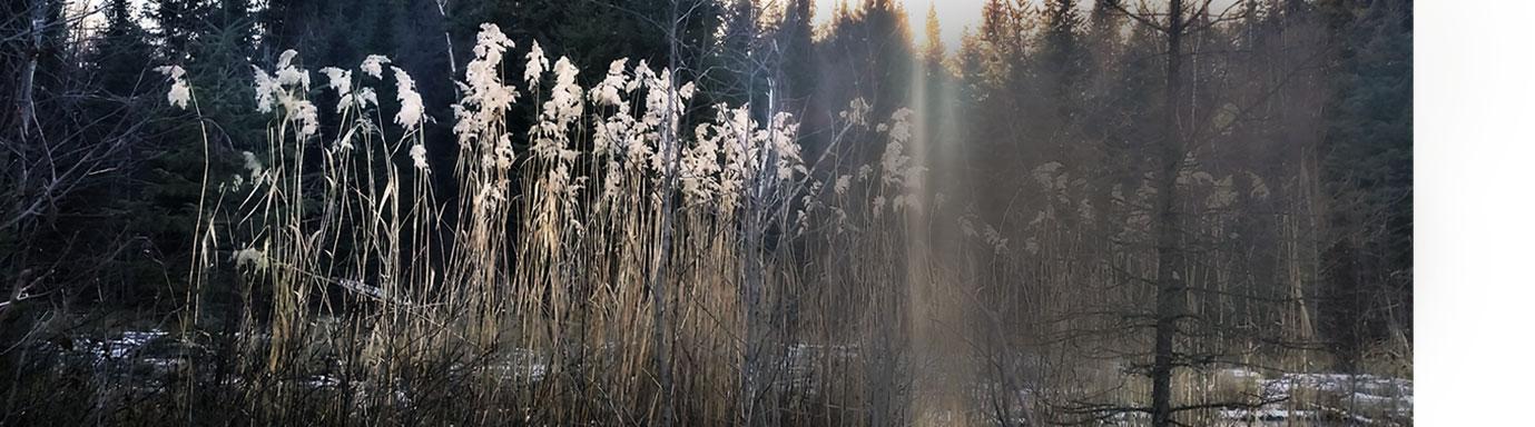 grace on a wildood morning - pond with sunlight beam- dawn kotzer photos