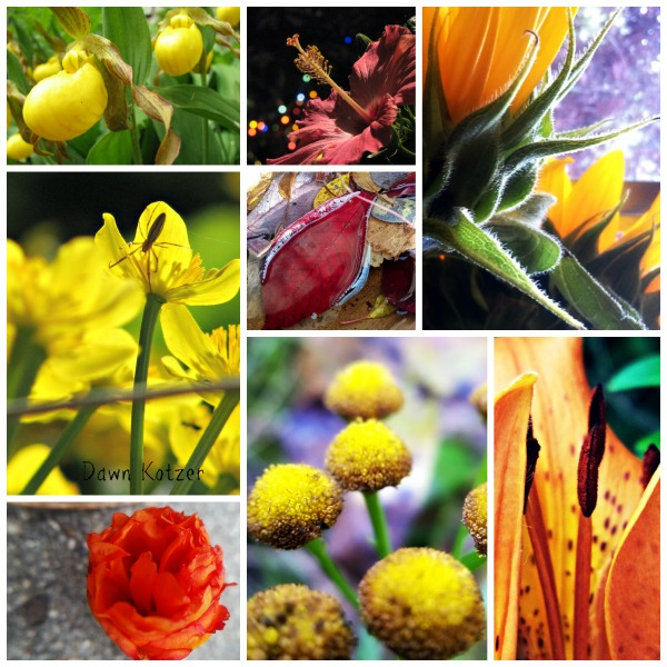 Sunshine colour Flora-Mora photos by Dawn Kotzer
