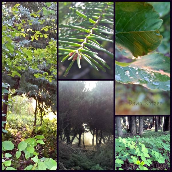 Wilderness paths of Forest wonder