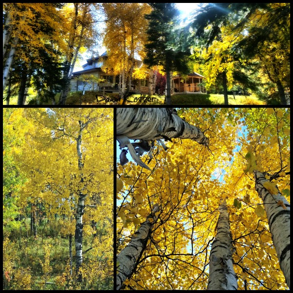 Forest Bathing autumn treescapes