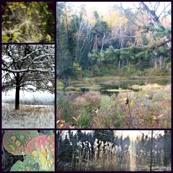 Forest Bathing - dewdrops- bog and thistledown