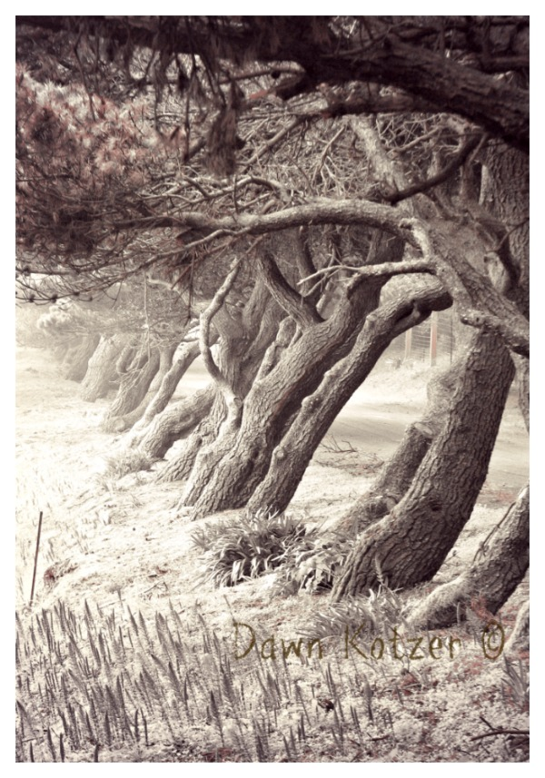 Sepia toned photo of weathered trees along wild wood lane
