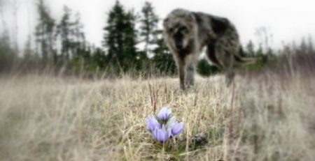 A dog and his passion prey or play